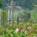 満開なバラ越しに見た、鶴舞公園の噴水 - 3