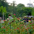 ポケモンGoをする人でごった返す鶴舞公園(2016年7月31日) - 20:満開なバラ越しに見た、ポケモンGoを楽しむ人たち