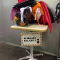 Photos: エアポートウォーク名古屋:ハロウィン記念写真用の衣装、無償貸出し中! - 2