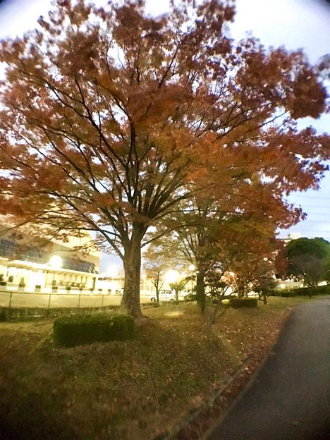 広角レンズ付けて撮影した紅葉した木 - 5