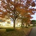 写真: 広角レンズ付けて撮影した紅葉した木 - 5