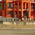 写真: 水抜きした落合公園・落合池 - 10