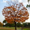 写真: 落合公園の紅葉 - 1