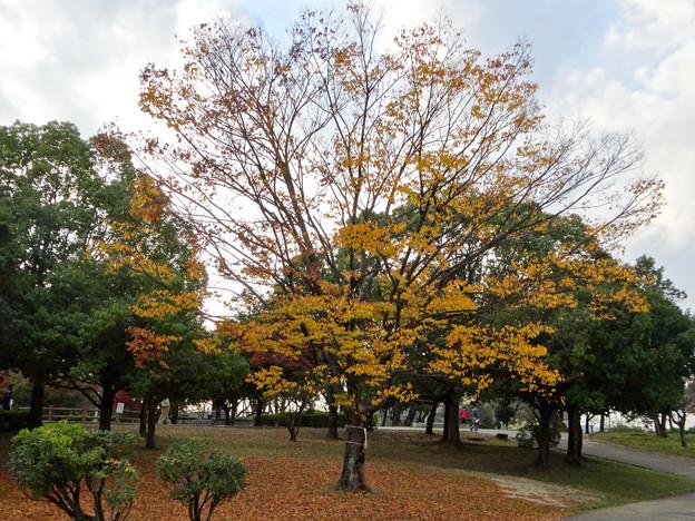 落合公園の紅葉 - 3