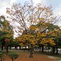 写真: 落合公園の紅葉 - 3