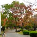 写真: 落合公園の紅葉 - 5