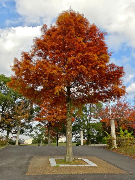 写真: 落合公園の紅葉 - 8