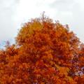 写真: 落合公園の紅葉 - 9