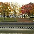 写真: 落合公園の紅葉 - 10