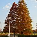 写真: 落合公園の紅葉 - 12