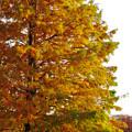 写真: 落合公園の紅葉 - 13