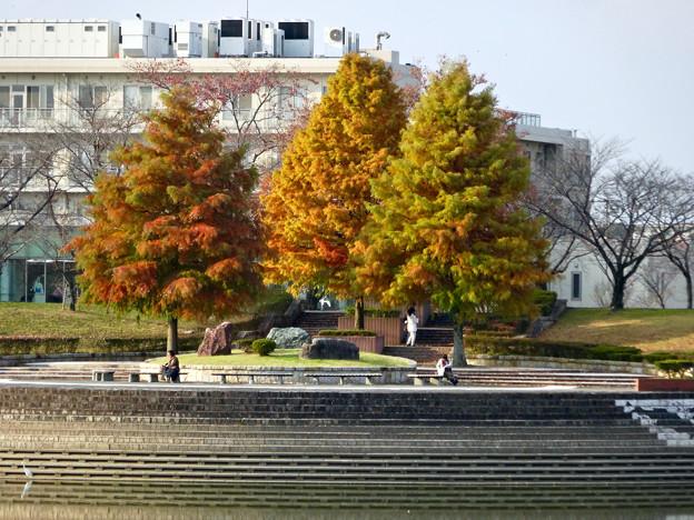 写真: 落合公園の紅葉 - 20