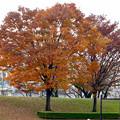 写真: 落合公園の紅葉 - 23