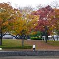 写真: 落合公園の紅葉 - 24