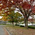 写真: 落合公園の紅葉 - 31