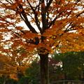 写真: 落合公園の紅葉 - 37
