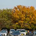 写真: 落合公園の紅葉 - 43