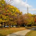 写真: 落合公園の紅葉 - 44