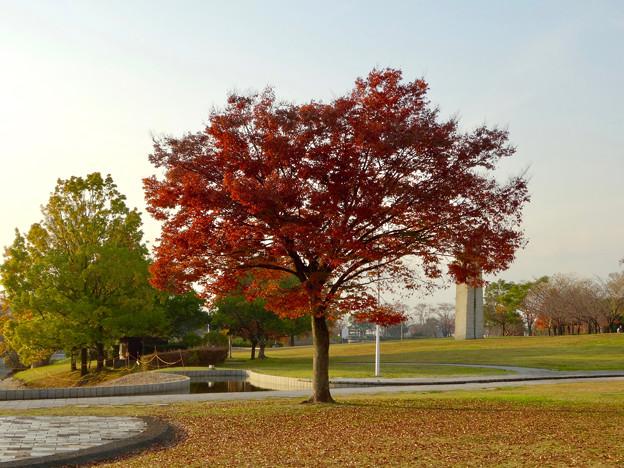 落合公園の紅葉 - 45