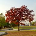 写真: 落合公園の紅葉 - 45