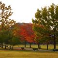 写真: 落合公園の紅葉 - 47
