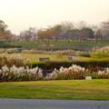 写真: 落合公園の紅葉 - 50