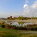 写真: 落合公園の紅葉 - 51