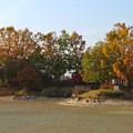 写真: 落合公園の紅葉 - 57