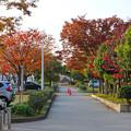 写真: 落合公園の紅葉 - 60