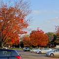写真: 落合公園の紅葉 - 64