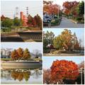 写真: 落合公園の紅葉 - 68