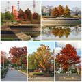 写真: 落合公園の紅葉 - 70
