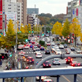 写真: 東山通・星ヶ丘駅付近の紅葉した街路樹 - 3