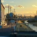 写真: 八田川沿いから見た名駅ビル群 - 10
