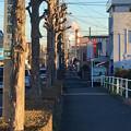 写真: 八田川沿いから見た王子製紙の煙突 - 1