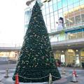 勝川駅前のクリスマスツリー 2016 No - 1