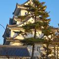 大垣公園 - 30:城西広場から見た大垣城