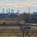 写真: 大池緑地公園から見た名駅ビル群 - 5