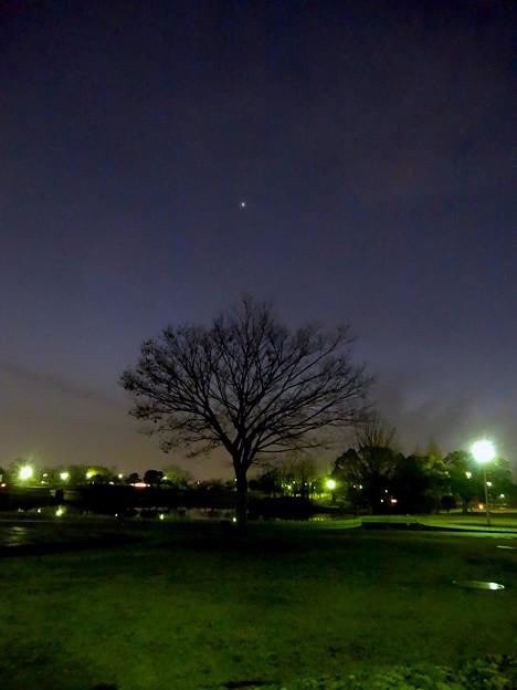 最大光度前日(2017年2月16日)、普段より輝く金星 - 4