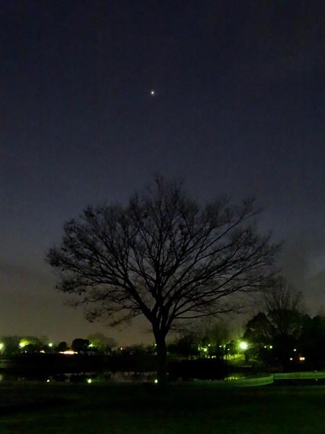 最大光度前日(2017年2月16日)、普段より輝く金星 - 9