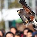 Photos: ギンジくん飛ぶw