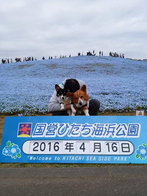 Photos: IMG_20160416_111418
