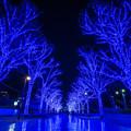 写真: Blue River