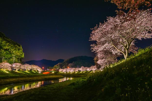 写真: 夜桜ライトアップ