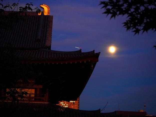 写真: 芝 秋の宵