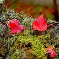 写真: 去り行く秋