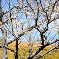 写真: 春のけしき