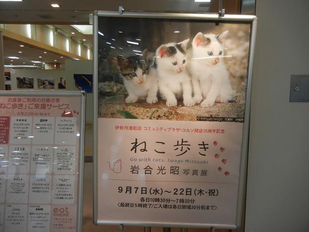 伊勢丹浦和でねこ歩き展(=^・^=)