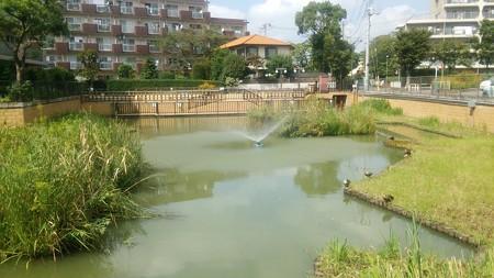 ちょっとした池