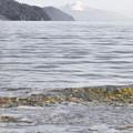 Photos: この水面の角度はよく見える。